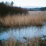 Purossa on runsaasti vettä - Kuva: Tuomas Heinonen