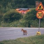 Tarkkaavaisena liikenteessä - Kuva: Tuomas Heinonen