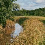 Finnoonpuro sateen jälkeen - Kuva Jukka Ranta