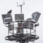 Fortumin antennin korppi - Kuva Bore Wanner