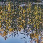 Heijastuksia purossa - Kuva Jukka Ranta