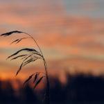 Ja aurinko nousee - Kuva Jukka Ranta