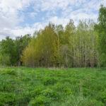 Loppukevään vihreyttä - Kuva Paul Stevens