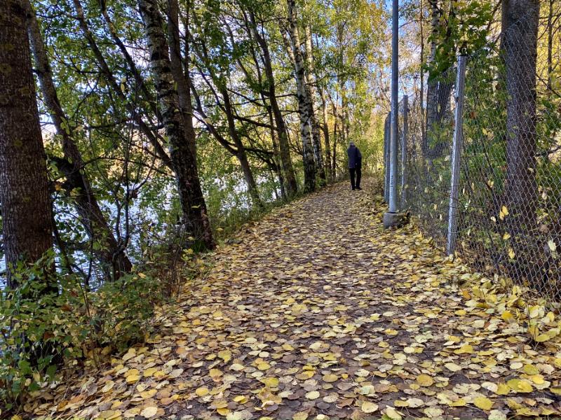 Lehtisadetta - Kuva Jukka Ranta