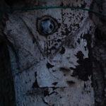 Liito-orava - Kuva: Paul Stevens