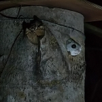 Liito-oravan riiusteluaika – Viikko 11/18