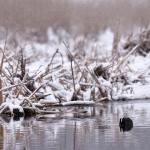 Lumisateen jälkeen - Kuva: Tommi Heinonen
