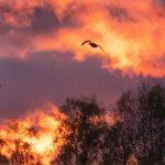 Maaginen auringonlasku 2 - Kuva Esa Mälkönen