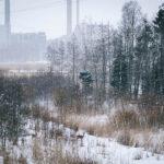 Metsäkauriit - Kuva Tuomas Heinonen