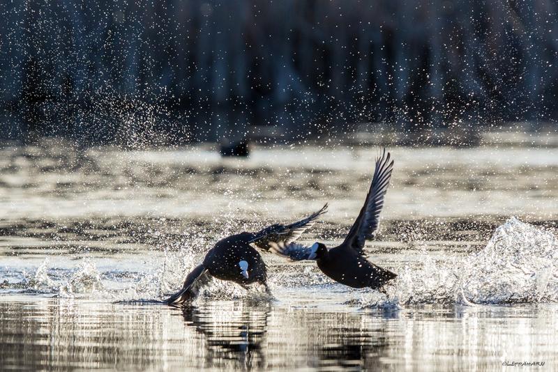 Altaan kevättouhut käynnistyivät vauhdilla - Kuva: Timo Leppäharju