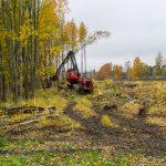Puiden kaatoa Syväsalmenkadun varrella - Kuva: Paul Stevens