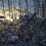 Pakkasaamun valonsäteet - Kuva Tommi Heinonen