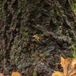 Papanoita - Kuva Paul Stevens