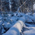 Ruokintapaikka viikko 6 - Kuva Jukka Ranta