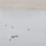 Sumuaamu - Kuva: Esa Mälkönen