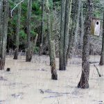 Tulvaa - kuva Timo Leppäharju