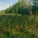 Altaan kaakonkulma - Kuva: Jukka Ranta