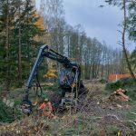 Puiden kaatoa puhdistamon metsässä - Kuva: Jukka Ranta