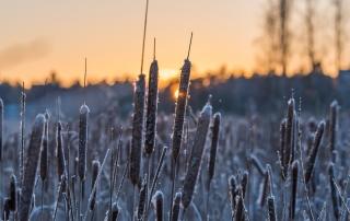 Marraskuun lopun aurinkoa - Kuva Paul Stevens