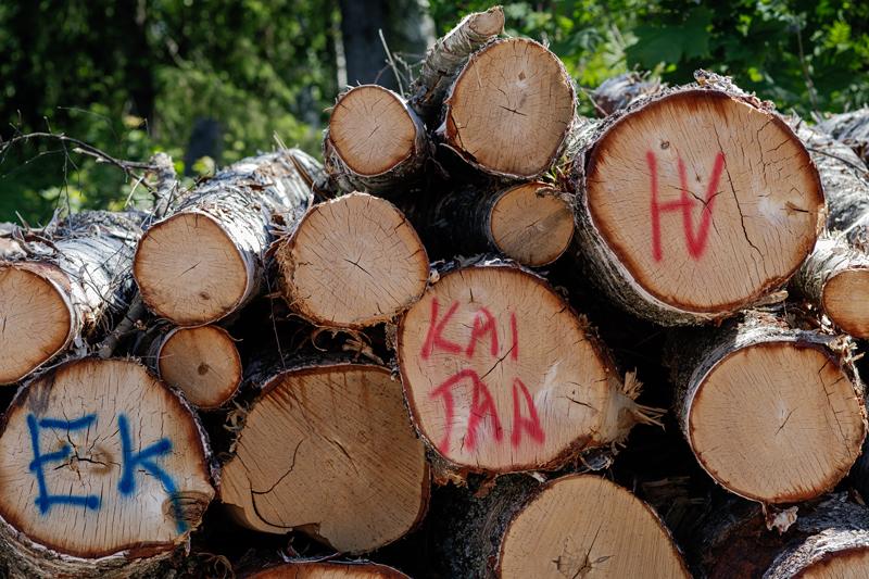 Finnoonsillan puiden kaatoalueella on vielä muutama tukkikasa - Kuva: Jukka Ranta