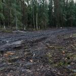 Tiistilän metsässä - Kuva: Jukka Ranta