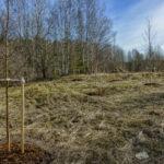 Ruderaatin niittoalue talven jälkeen - Kuva Jukka Ranta