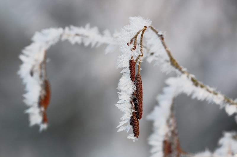 Lepän jääfraktaaleja puron varressa - Kuva: Jukka Ranta