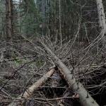 Joka puolella ja joka puolelta, nyt myös Tiistilän metsä – Muutosraportti 3/18
