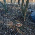 Altaan ympäristön kunnostaminen aloitettu, muutoksen seuranta – Viikko 49/15