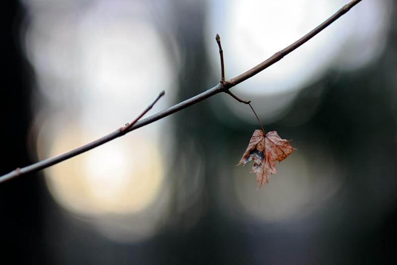 Viikon luonne, valoa ja varjoa - Kuva: jukka Ranta