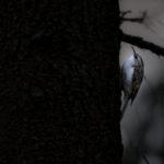 Marraskuun harmaus – Viikko 48/15