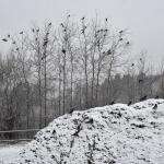 Lauantaina oli maisema talvinen - Kuva: Tommi Heinonen