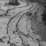 Altaan jäätä - Kuva: Paul Stevens