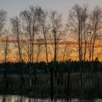 Auringonlaskun rastaat - Kuva: Paul Stevens