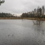 Tulvaniityllä on vettä - Kuva: Paul Stevens